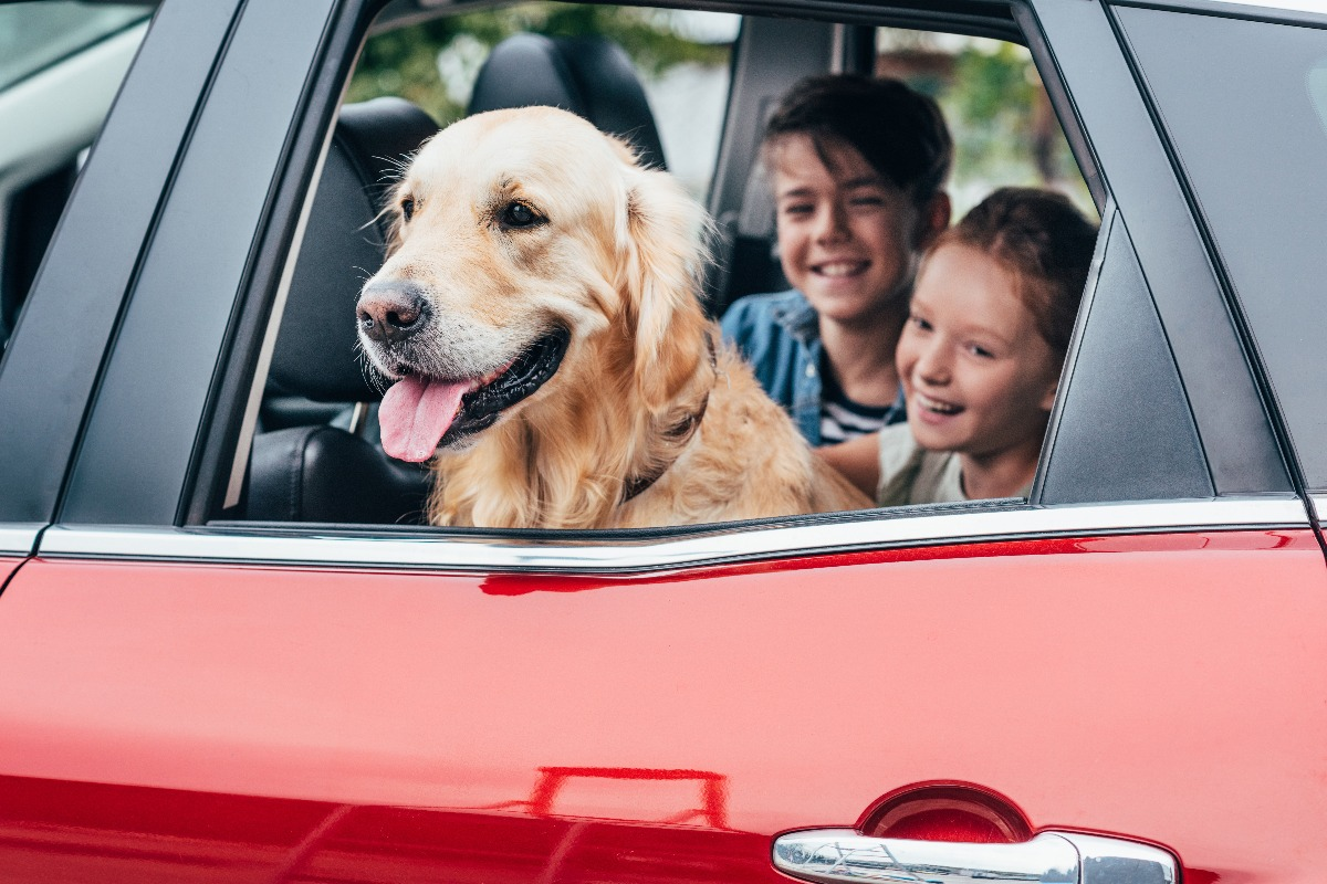 dog and kids in a car